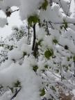 Oymalitepe de Nisan kar?