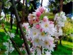 Bahar gelirken